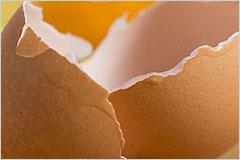 割れた卵の殻の写真
