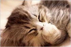 寝転んで眠そうにしているネコの写真