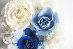 白、水色、青のバラの花の写真