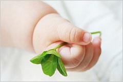 四葉のクローバーを握りしめた赤ちゃんの手の写真