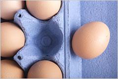 卵のパックから、卵が1つだけはみ出している写真