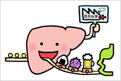 消化と代謝をイメージしたイラスト